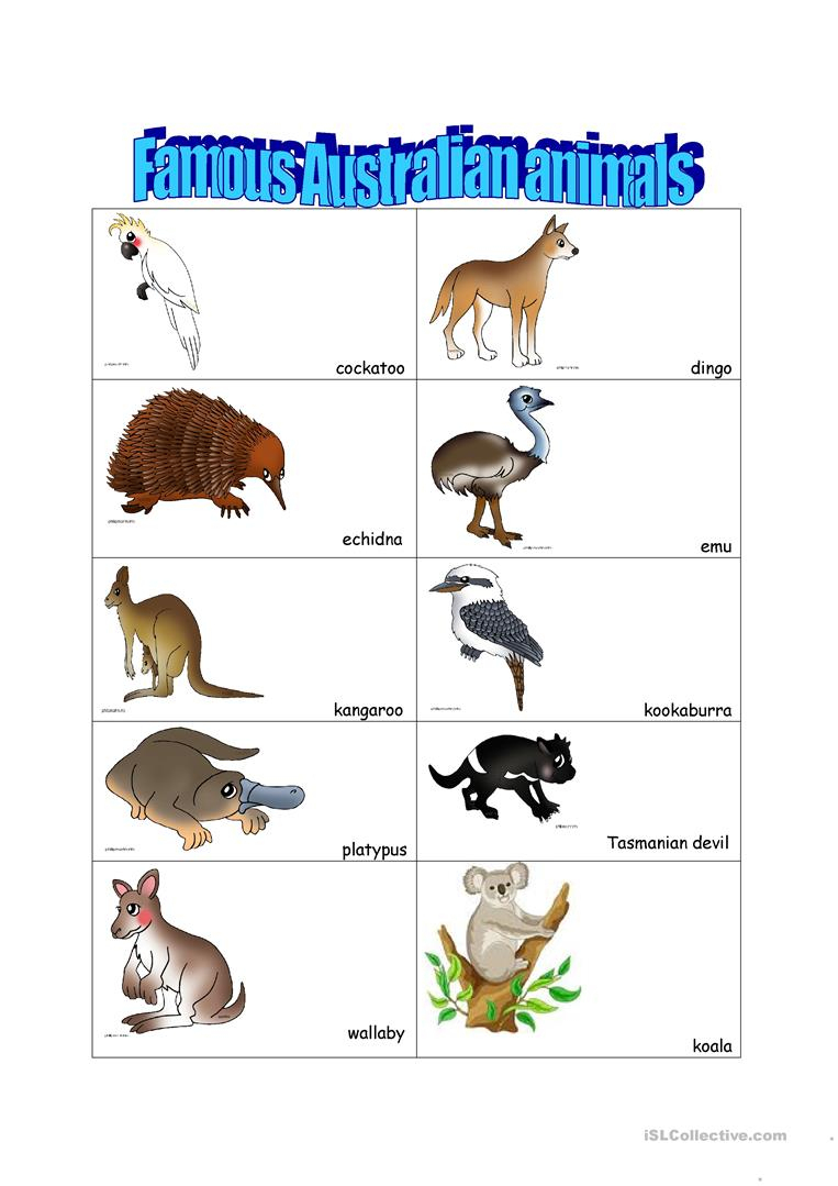 14 Free Esl Australian Animals Worksheets - Free Printable Pictures Of Australian Animals