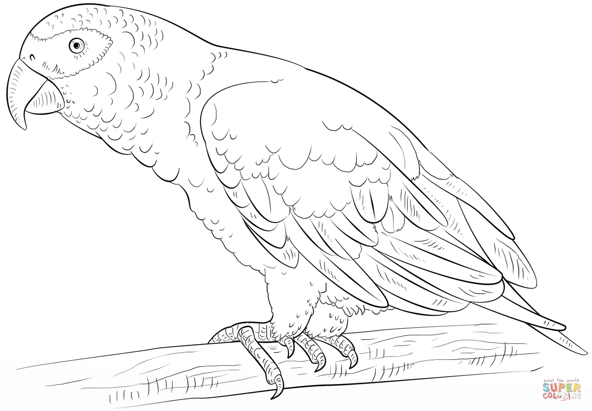 African Grey Parrot Coloring Page | Free Printable Coloring Pages - Free Printable Parrot Coloring Pages