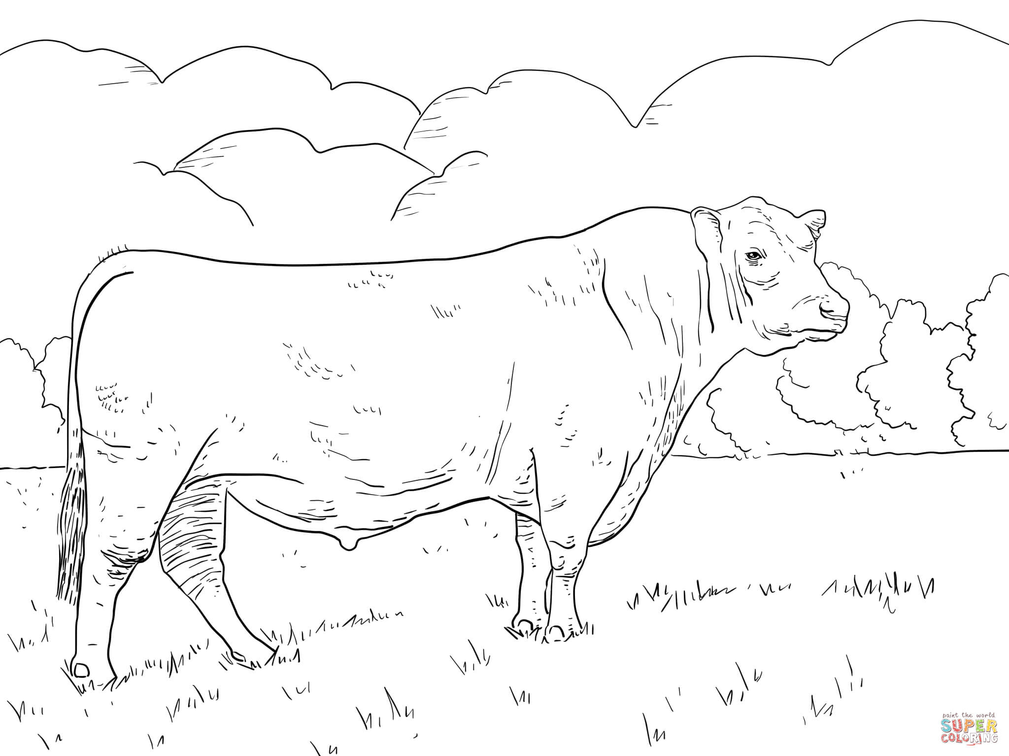Angus Bull Coloring Page   Free Printable Coloring Pages - Coloring Pages Of Cows Free Printable