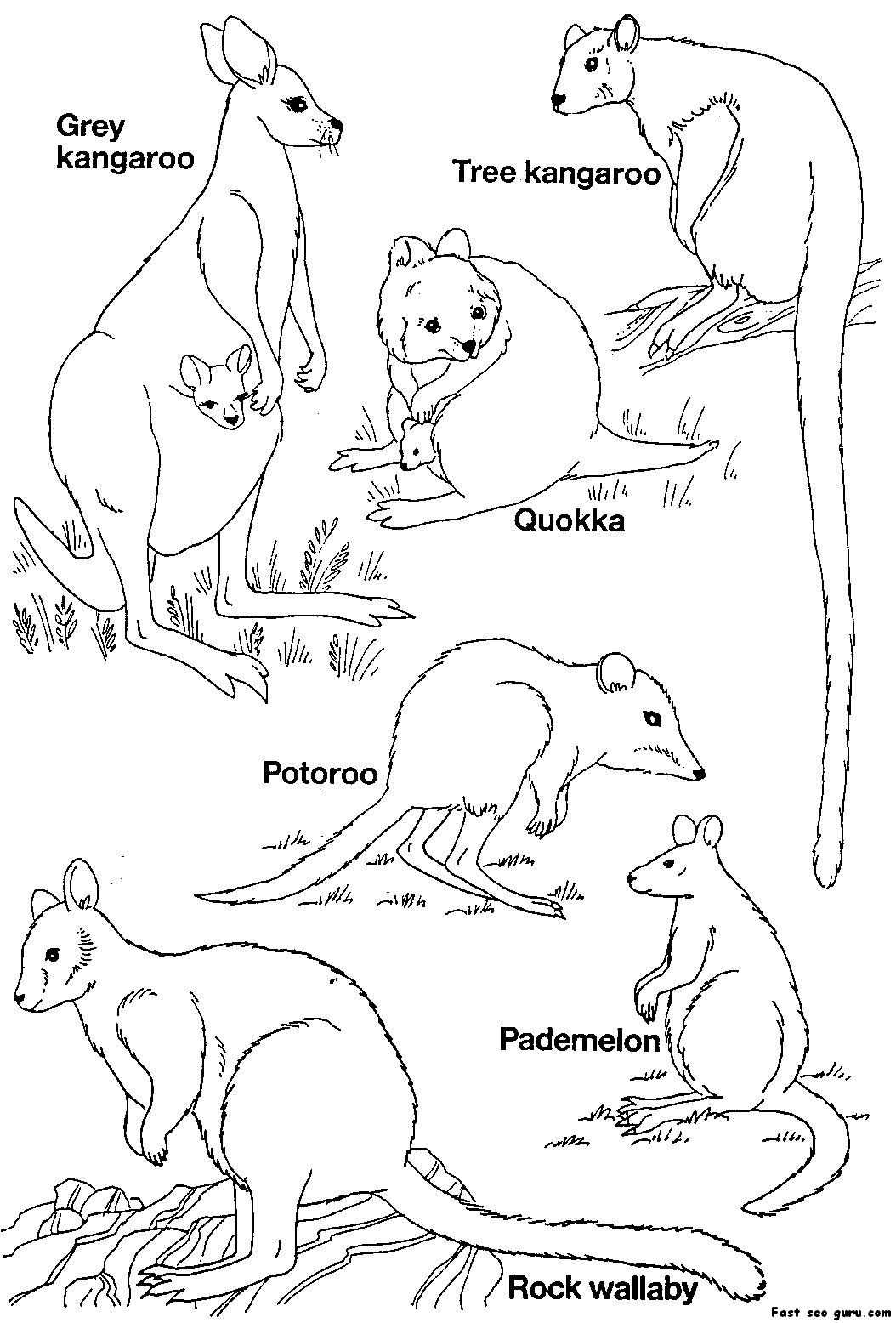 Australian Animals Homepage Animal | Pbl | Australia For Kids - Free Printable Australian Animals