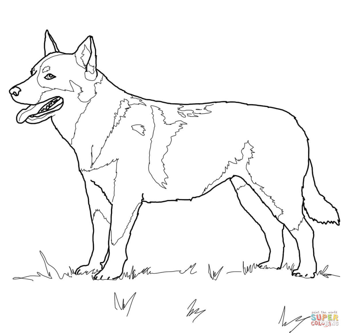 Australian Cattle Dog Coloring Page | Free Printable Coloring Pages - Colouring Pages Dogs Free Printable