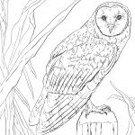 Barn Owl Coloring Page | Free Printable Coloring Pages   Free Printable Barn Coloring Pages