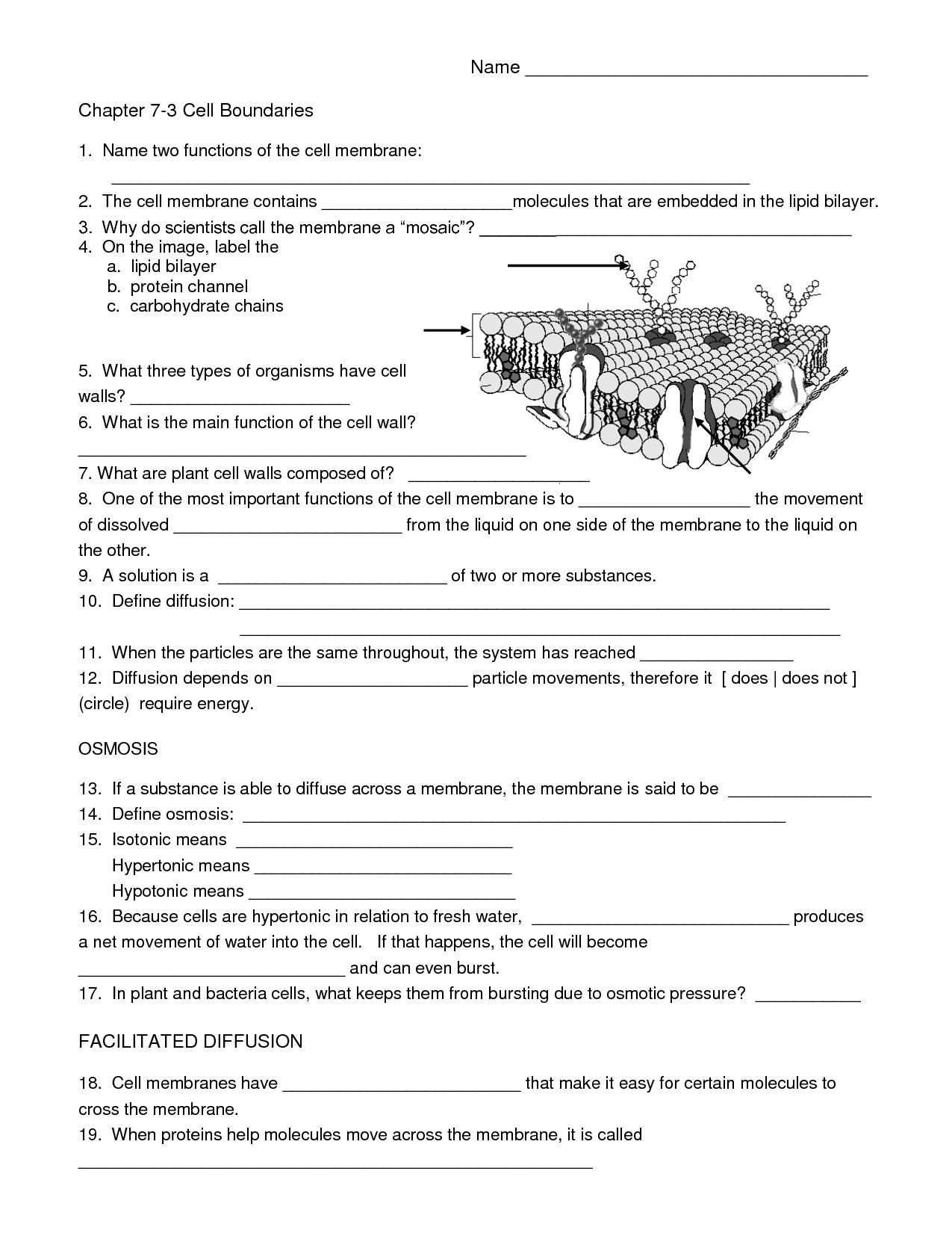 Biology Cell Worksheets | Carpe Diem Science | Pinterest - Free Printable Biology Worksheets For High School