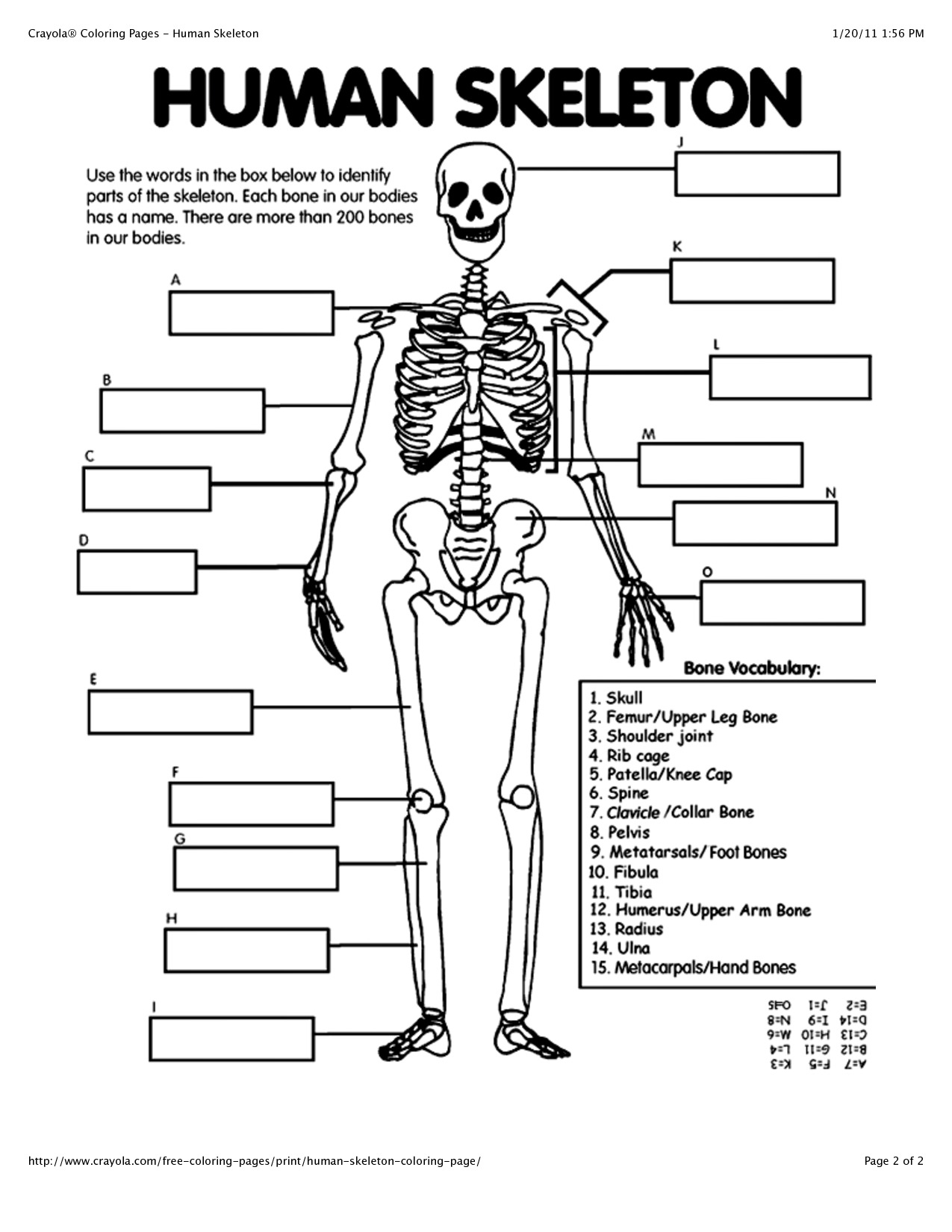 Coloring Pages : Body Coloring Pages For Preschoolers New Crafty - Free Printable Human Anatomy Coloring Pages