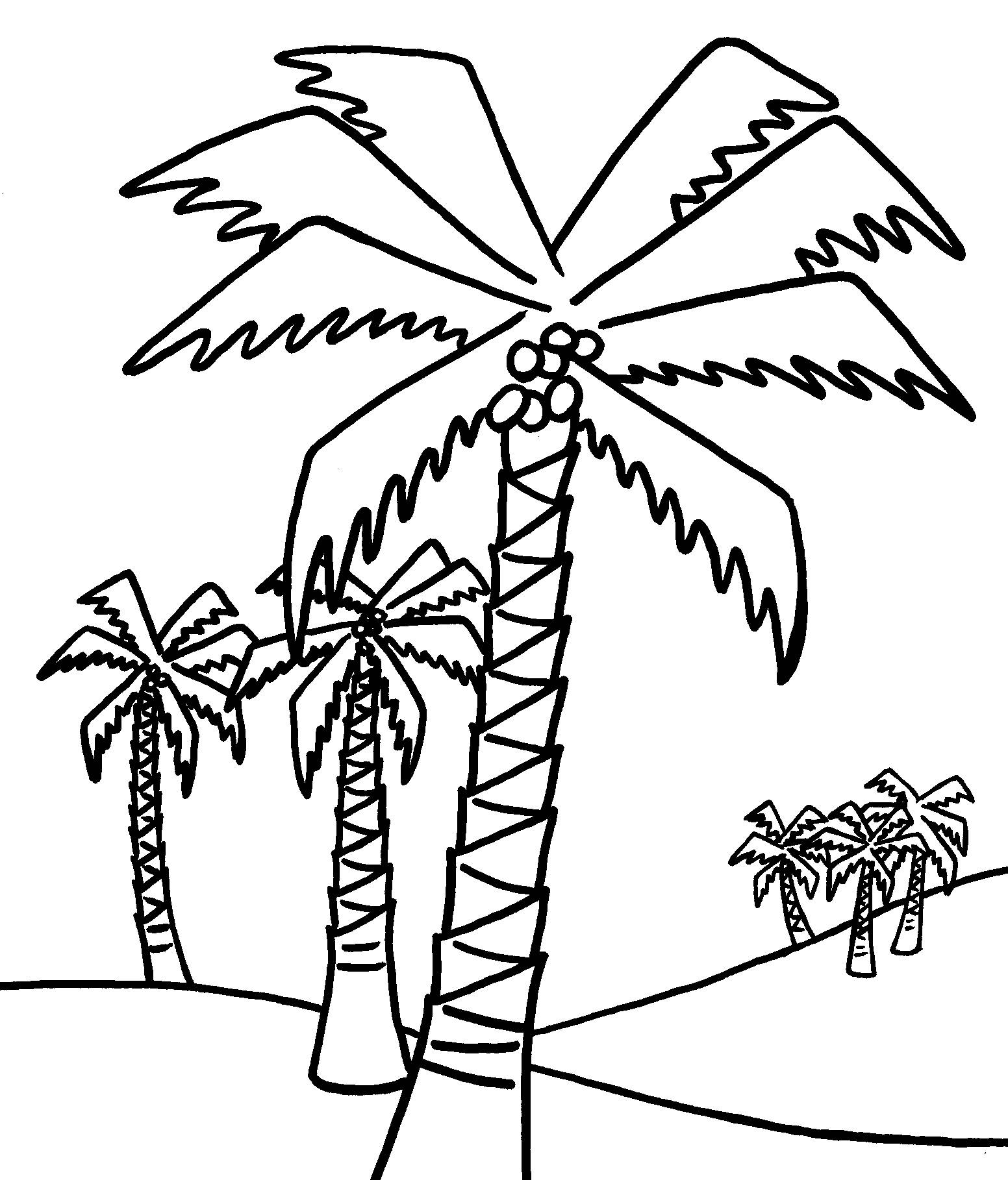 Coloring Pages ~ Chicka Boom Palm Tree Coloring Page Free Printable - Tree Coloring Pages Free Printable