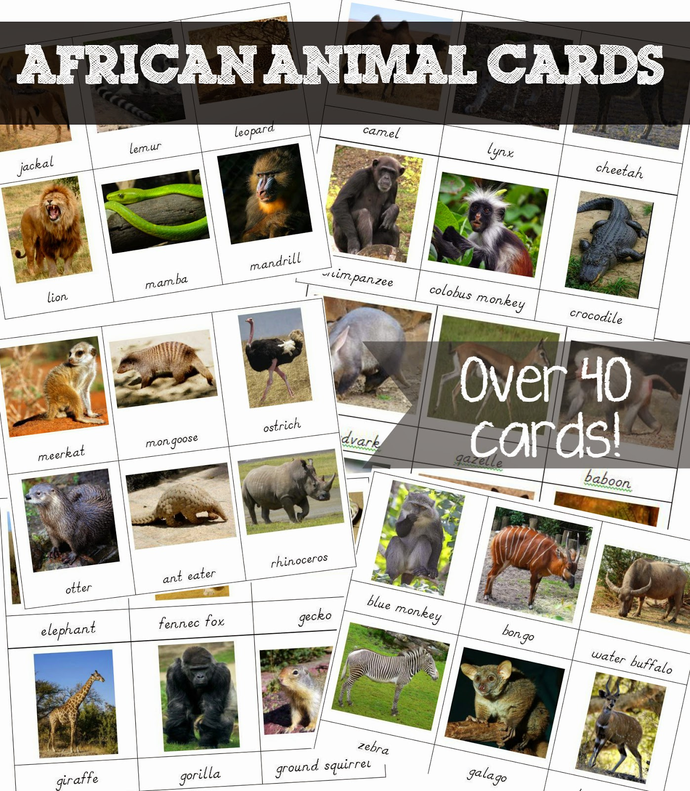 Free Printable African Animal Cards - Welcome To Mommyhood - Free Printable Animal Cards
