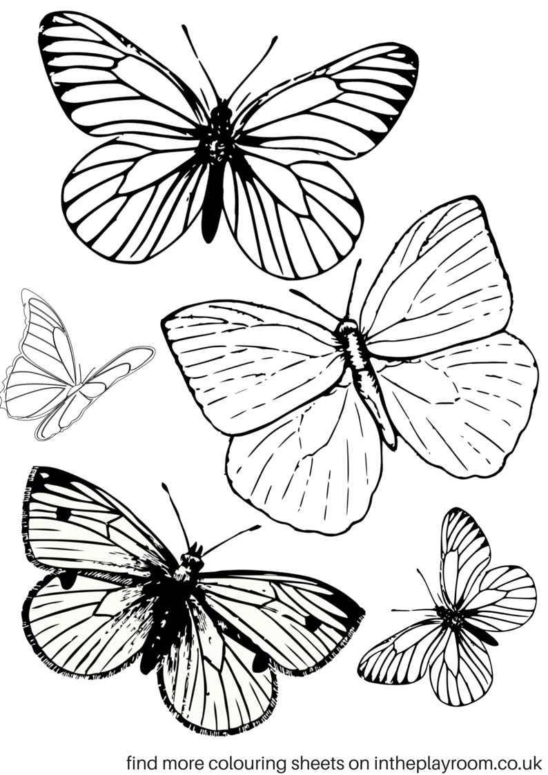 Free Printable Butterfly Colouring Pages   Coloring Tutorials - Free Printable Butterfly Pictures