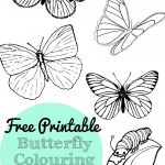 Free Printable Butterfly Colouring Pages   In The Playroom   Free Printable Butterfly