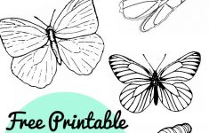 Free Printable Butterfly Colouring Pages – In The Playroom – Free Printable Butterfly Pictures