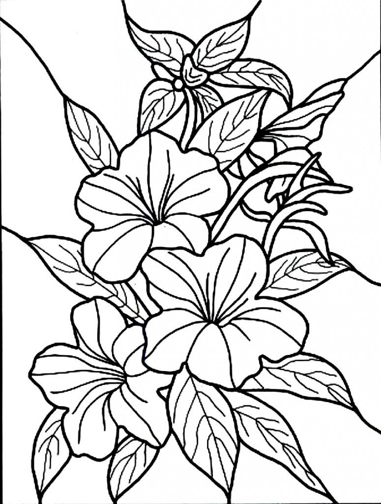 Free Printable Hibiscus Coloring Pages For Kids   Colouring, Drawing - Free Printable Hibiscus Coloring Pages