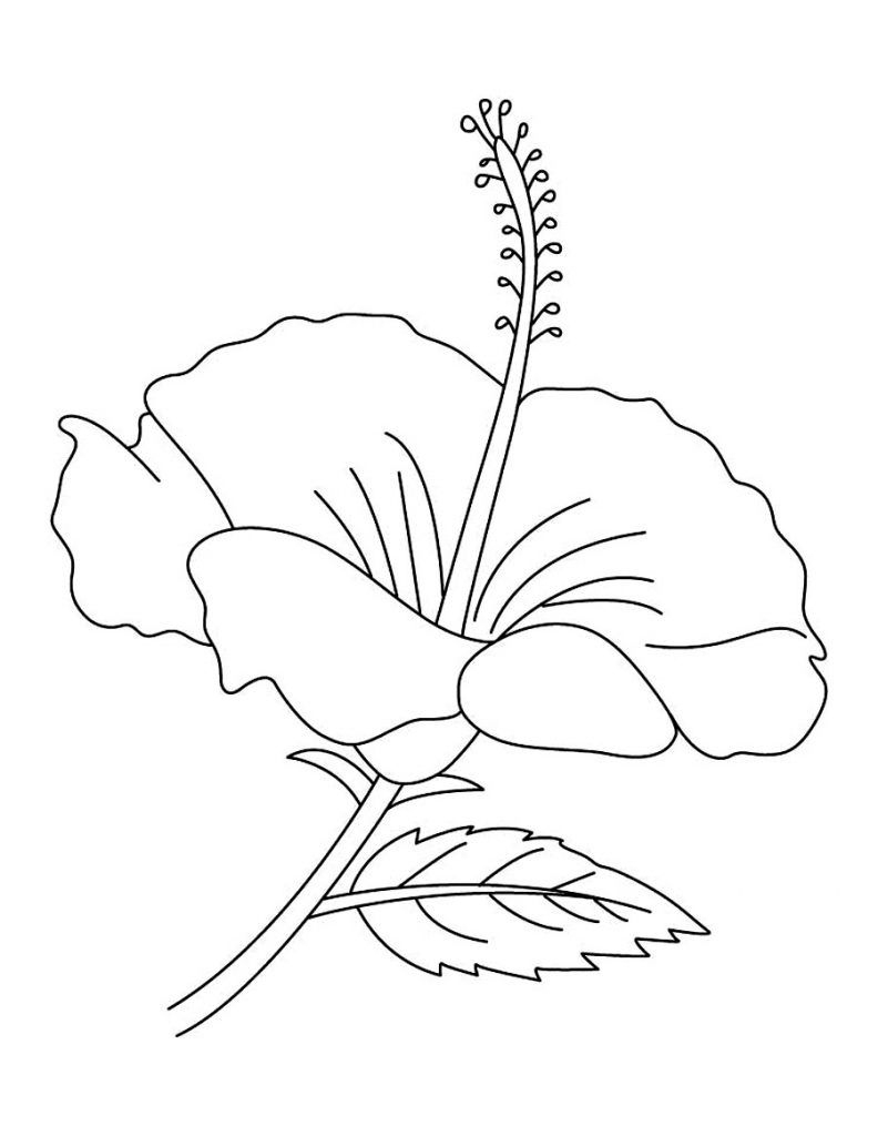 Free Printable Hibiscus Coloring Pages For Kids | Flowers & Other - Free Printable Hibiscus Coloring Pages