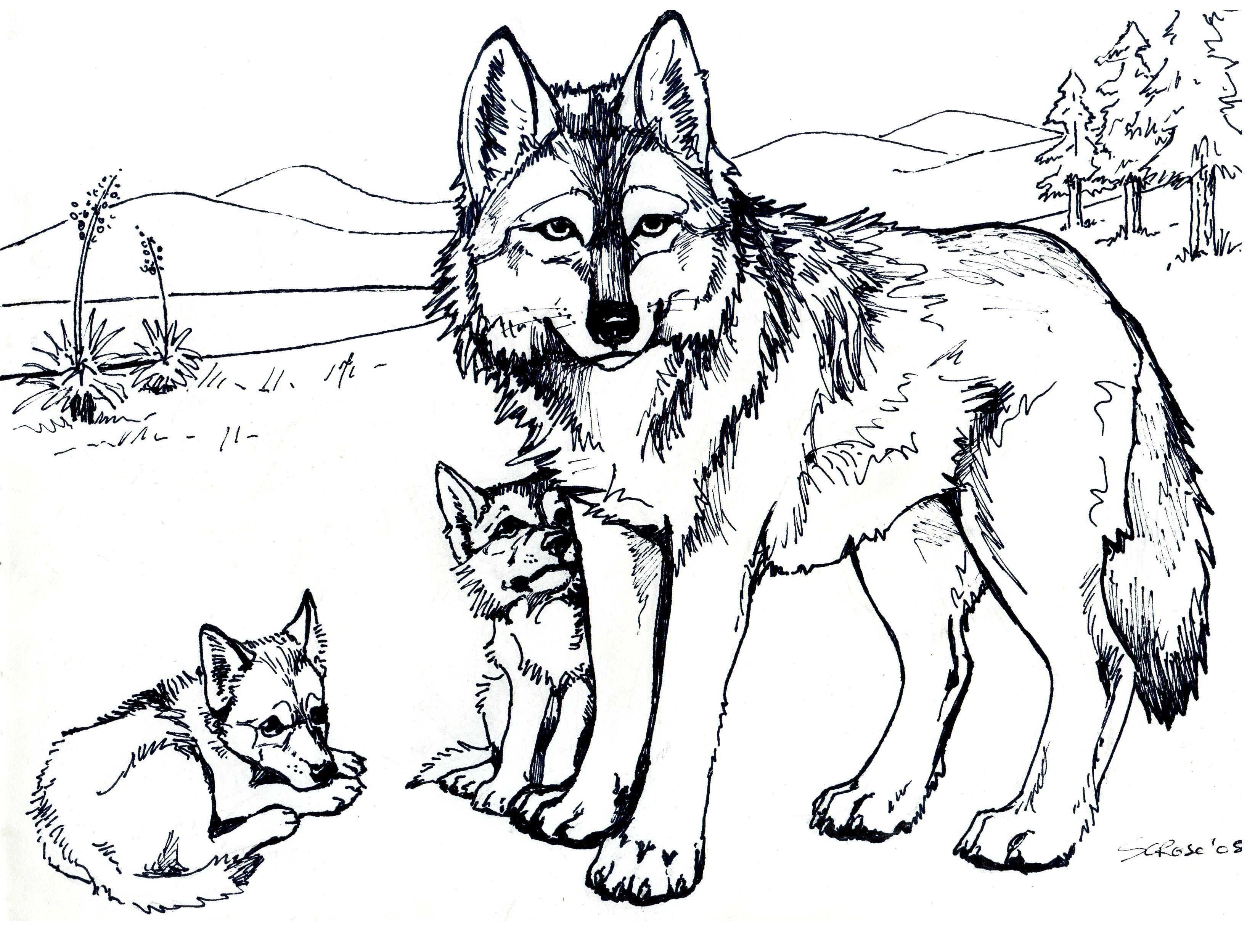Free Printable Wolf Coloring Pages For Kids   Eden   Pinterest - Free Printable Realistic Animal Coloring Pages
