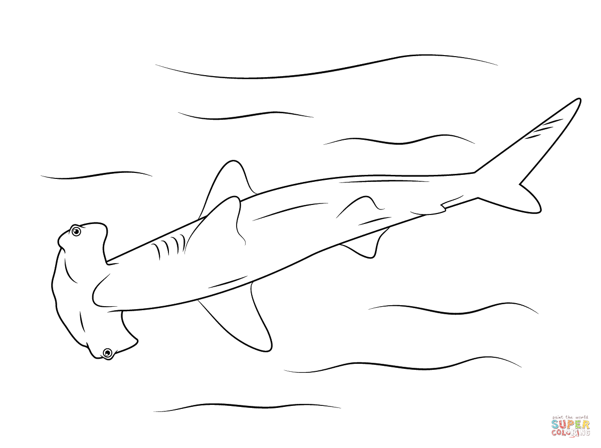 Hammerhead Shark Coloring Page | Free Printable Coloring Pages - Free Printable Great White Shark Coloring Pages