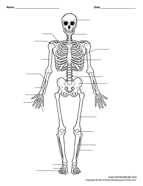 Human Skeleton Worksheet | Homeschool-Science | Skeleton Anatomy - Free Printable Human Anatomy Worksheets