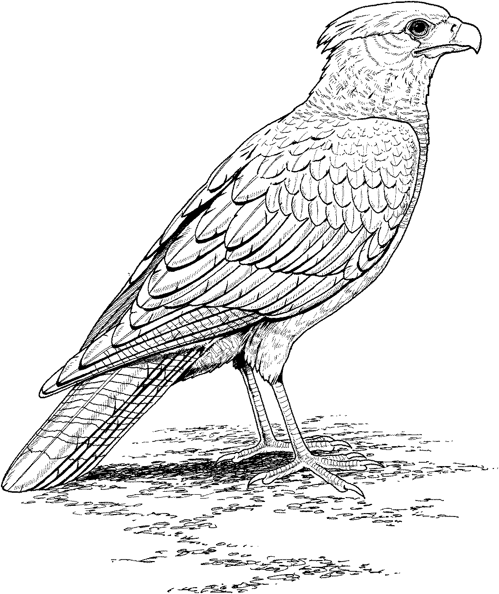 Realistic Animal Coloring Pages Fresh Free Wild Gallery Printable - Free Printable Realistic Animal Coloring Pages