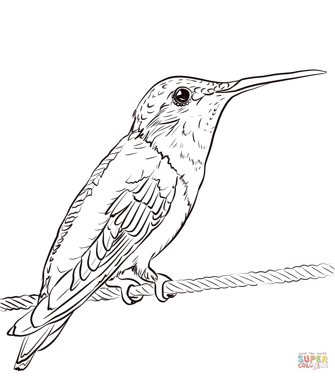 Ruby-Throated Hummingbird Coloring Page | Free Printable Coloring Pages - Free Printable Pictures Of Hummingbirds