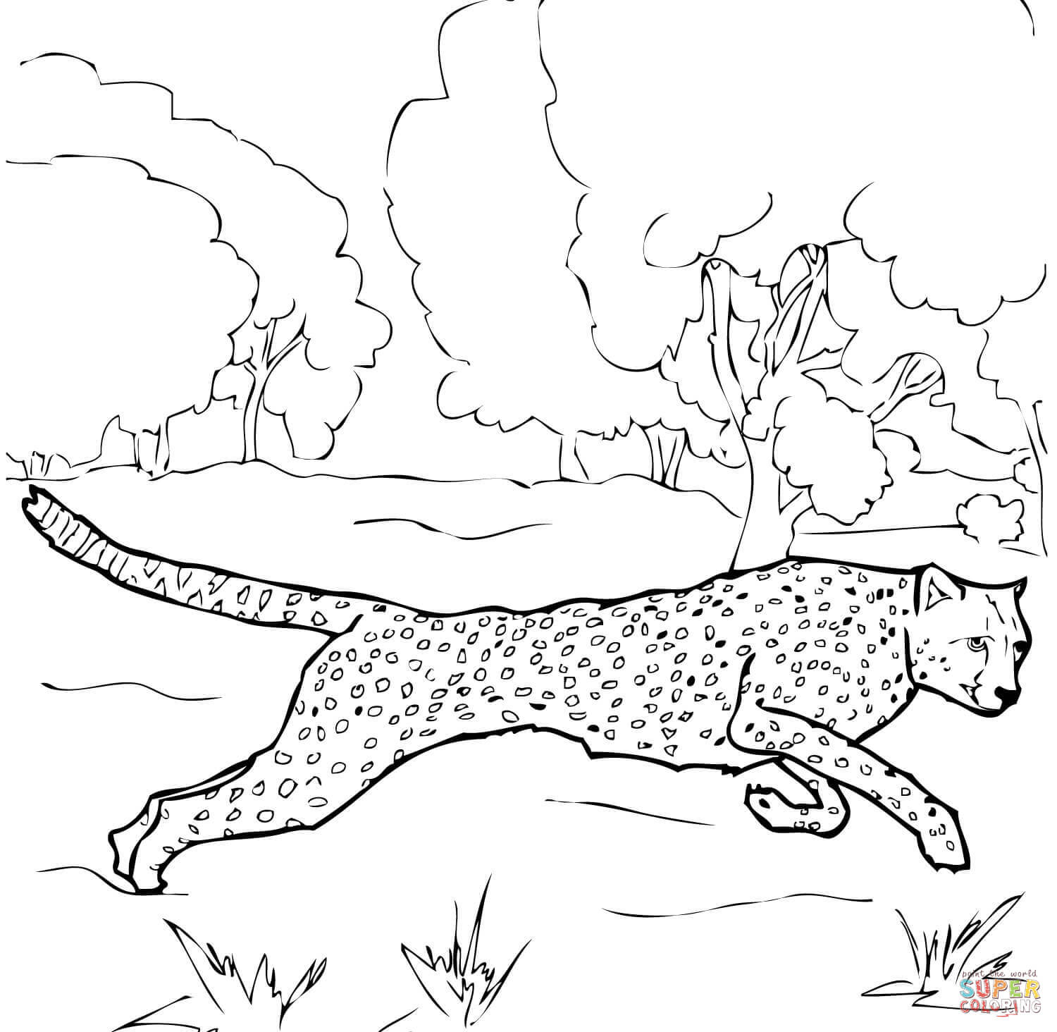Running Cheetah Coloring Page | Free Printable Coloring Pages - Free Printable Cheetah Pictures
