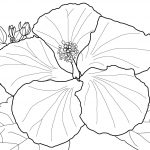 Search Results For Hibiscus Coloring Pages On Getcolorings – Free Printable Hibiscus Coloring Pages