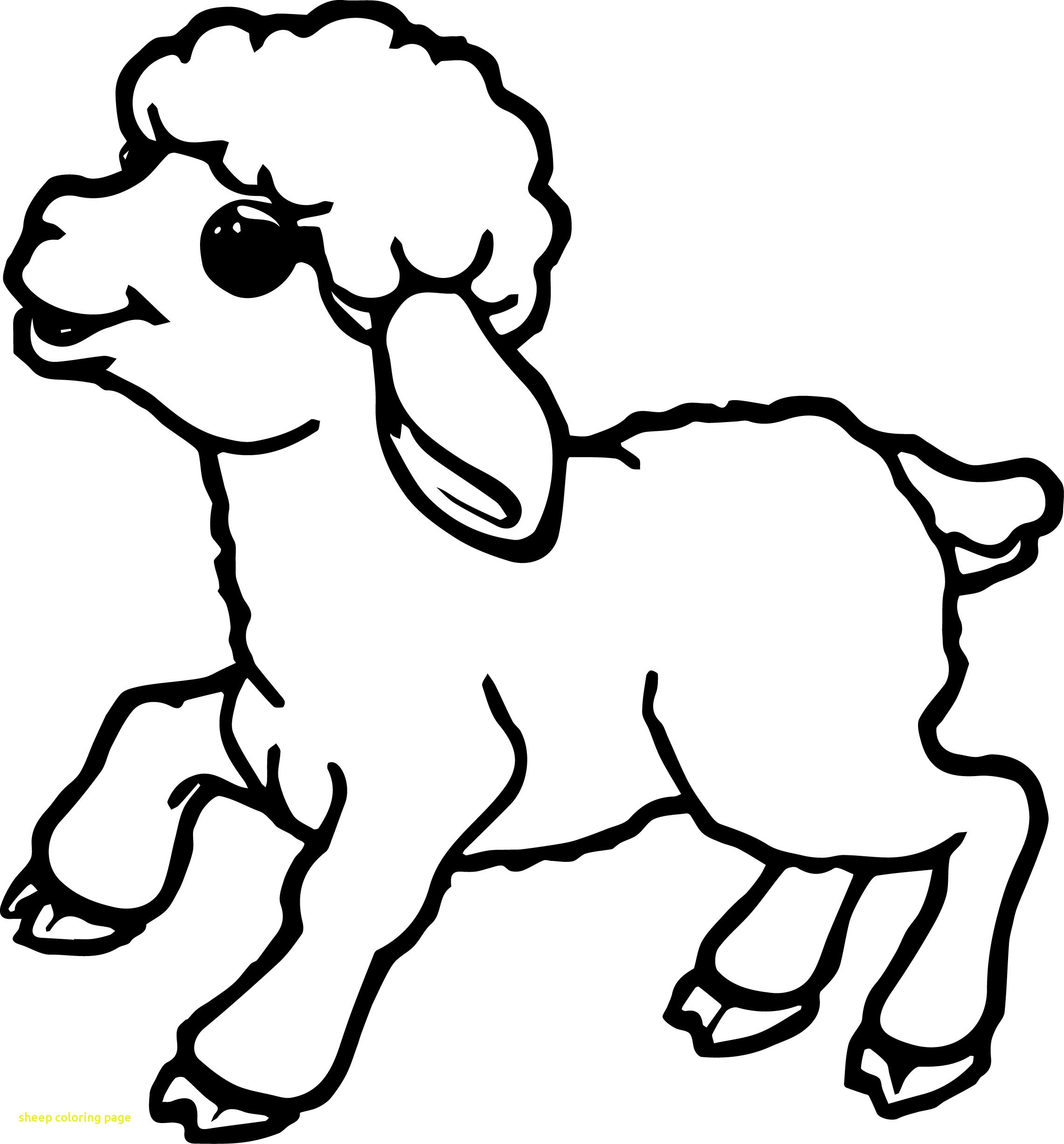 Sheep Coloring Page | Teamshania : Content Coloring Pages For - Free Printable Pictures Of Sheep