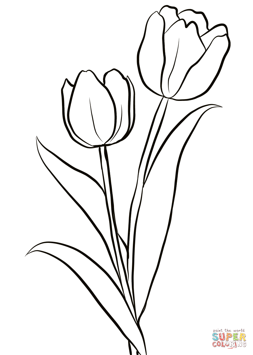 Two Tulips Coloring Page From Tulip Category. Select From 28148 - Free Printable Tulip Coloring Pages