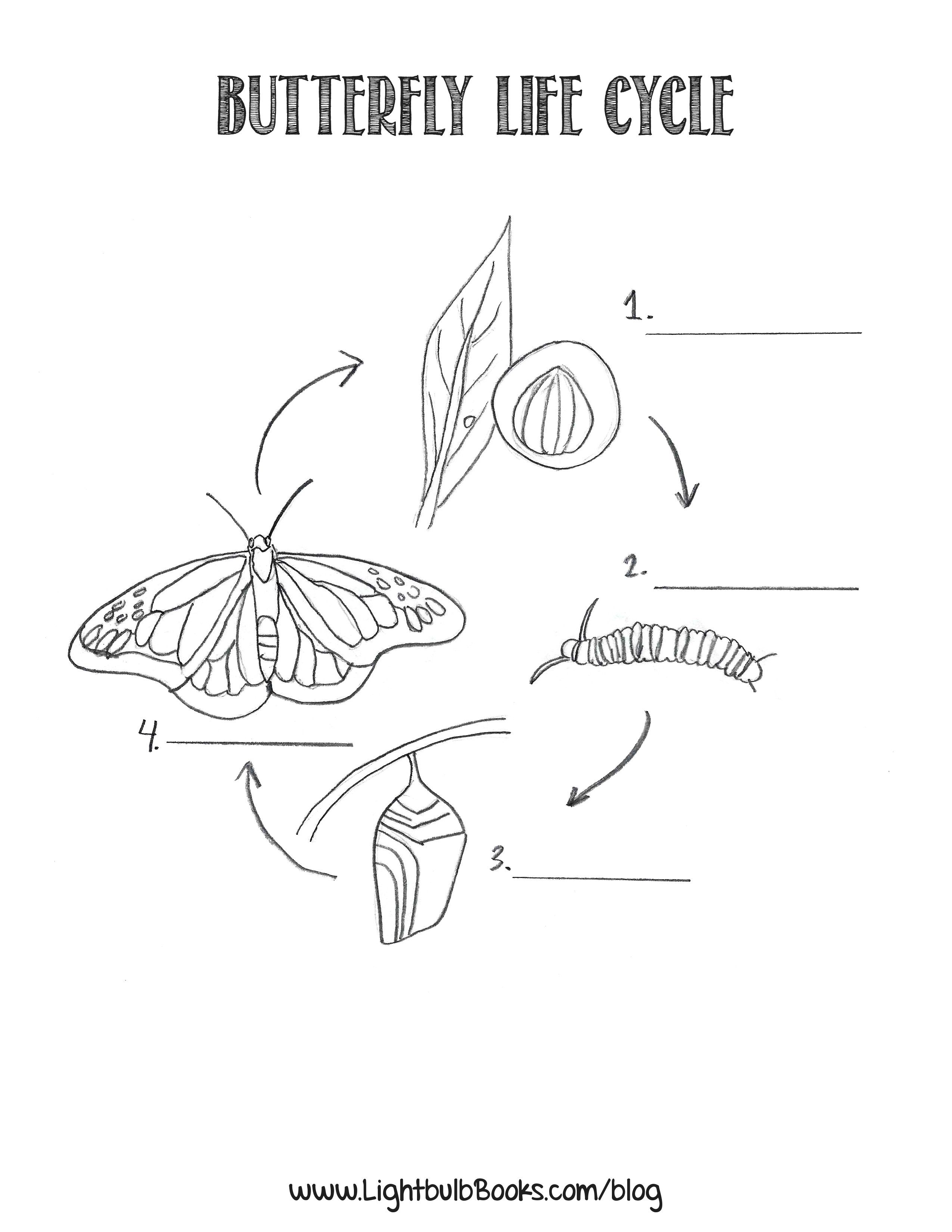 Worksheet : Life Cycle Of Butterfly Photo The Create Webquest For - Life Cycle Of A Frog Free Printable Book